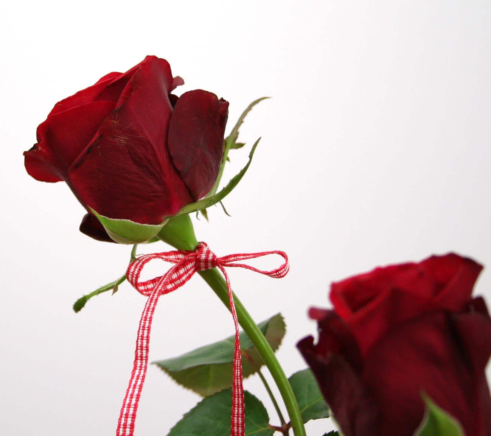 rote rose mit vichy karo valentinstag satinband discount satinb nder richtig preiswert kaufen. Black Bedroom Furniture Sets. Home Design Ideas